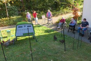 Hühner für Senioren – Neue Mitbewohner im Seniorenhaus